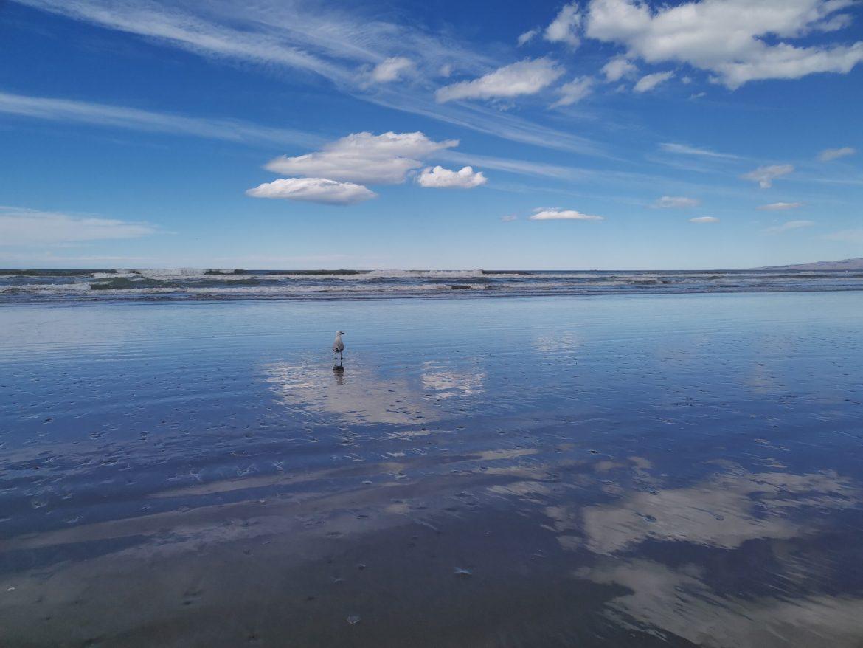 新西兰全搜索TV(第012集):天空之境,基督城海边森林探险