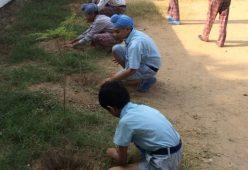 Ankur School students plant 50 saplings