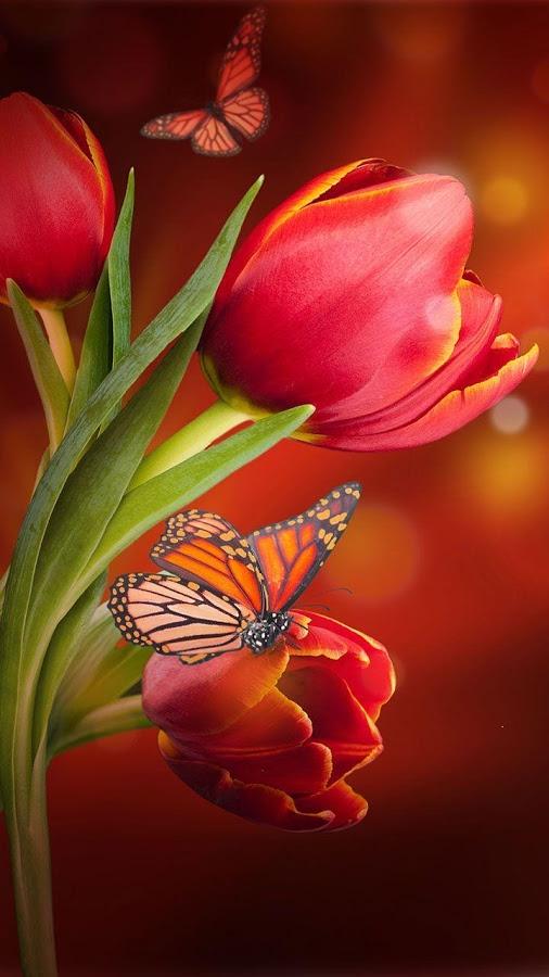 Flower Live Wallpaper : flower, wallpaper, Beautiful, Flowers, Wallpapers, Android