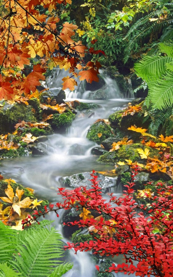 Live Wallpaper Fall Leaves Top 10 Waterfall Live Wallpapers Apps For Android