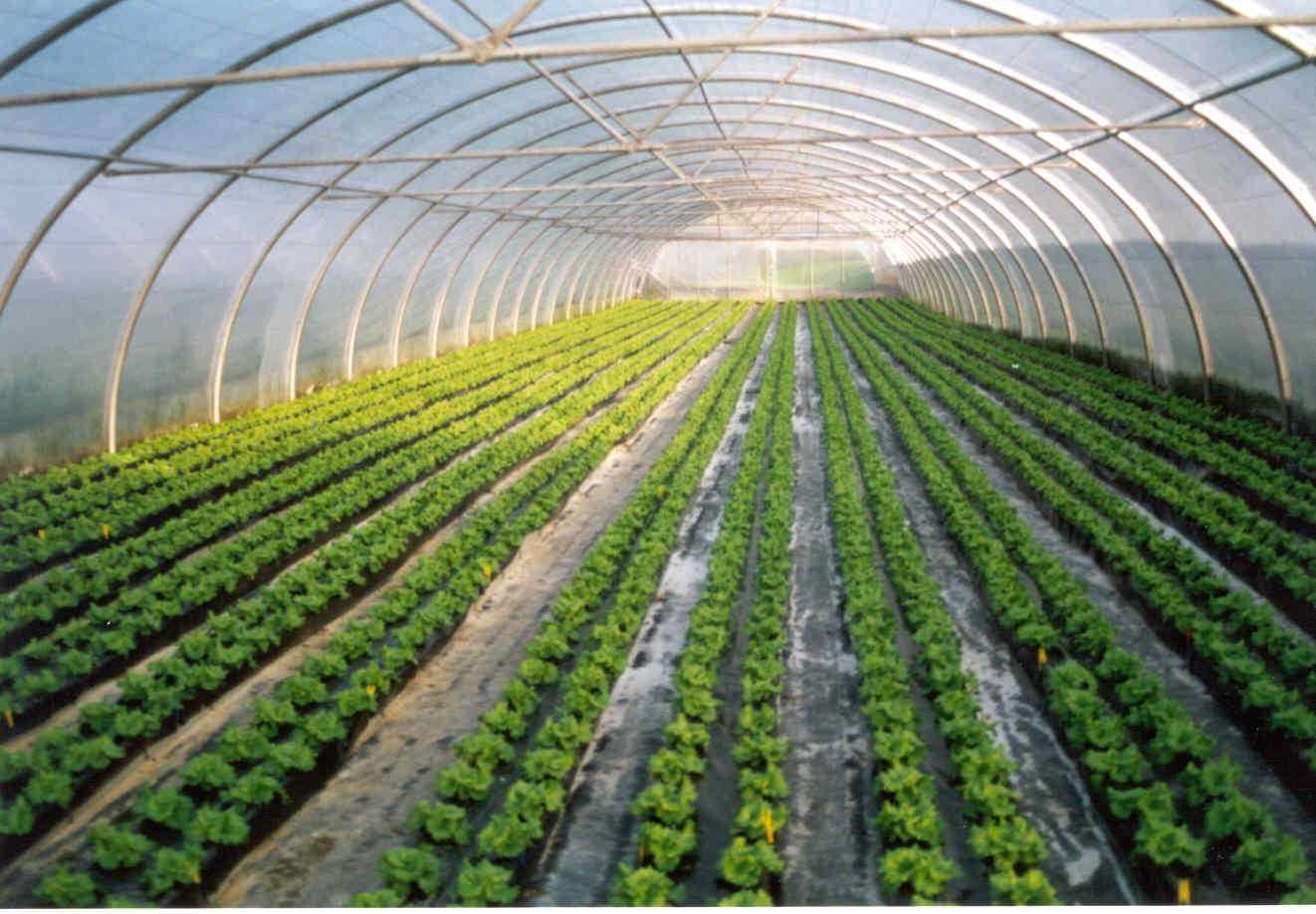 Big-data-agricultura
