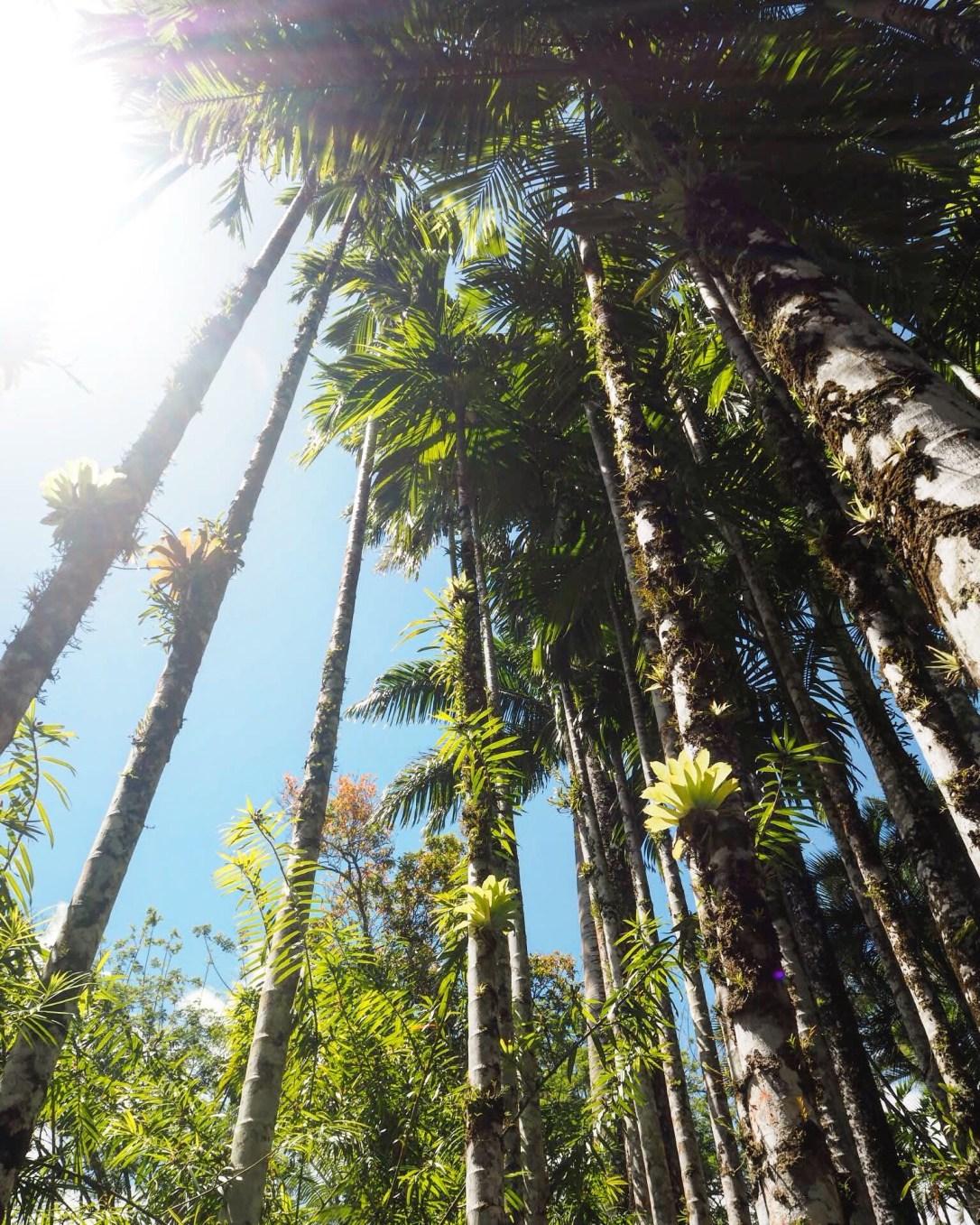 Amazing palm trees stretching upwards