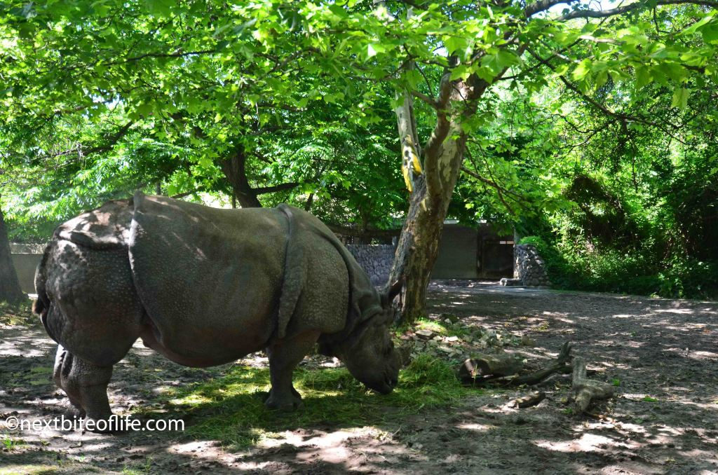 rhino at berlin zoo
