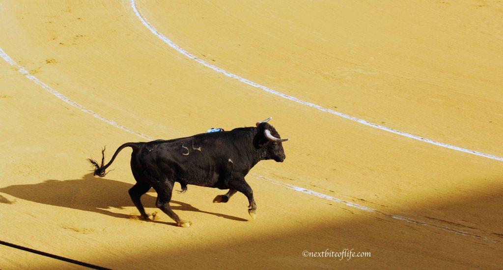bull running corrida spain