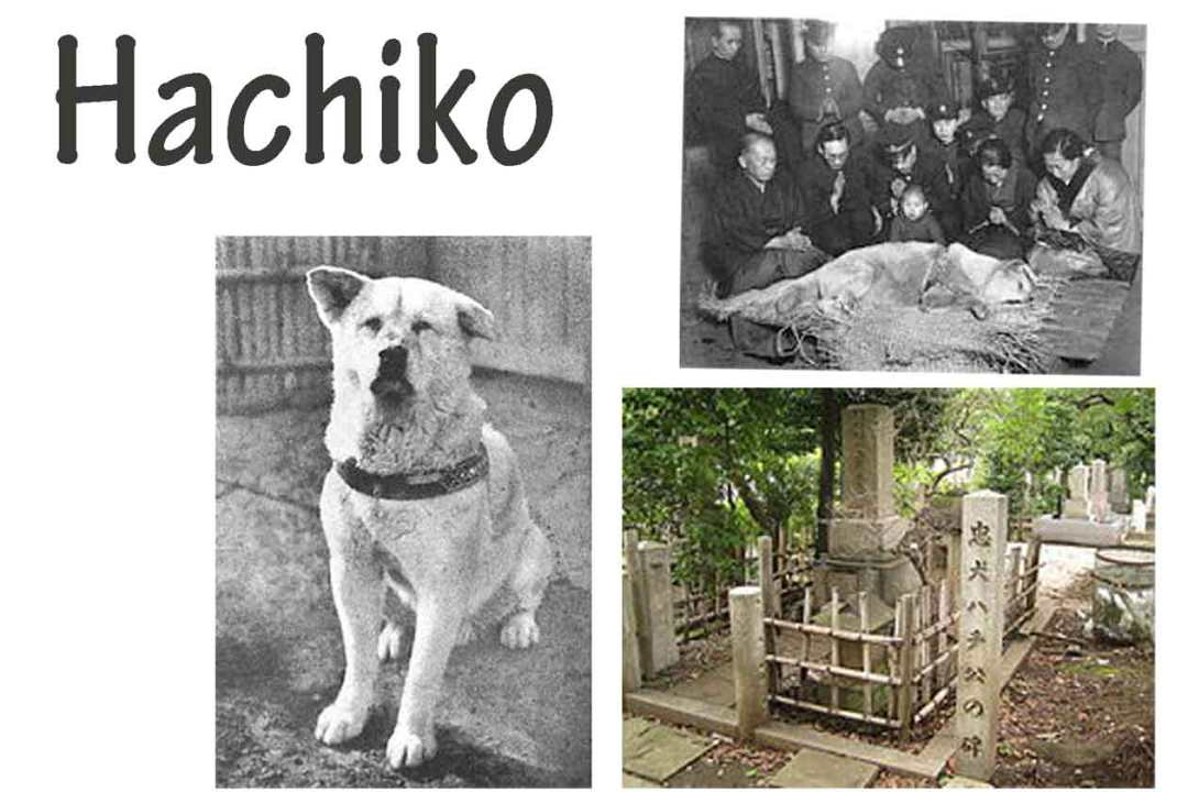 shibuya district hachiko collage
