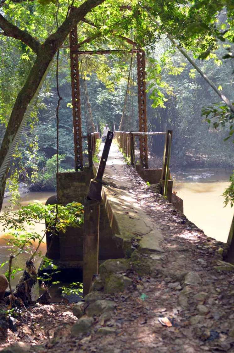 bridge osun oshogbo grove