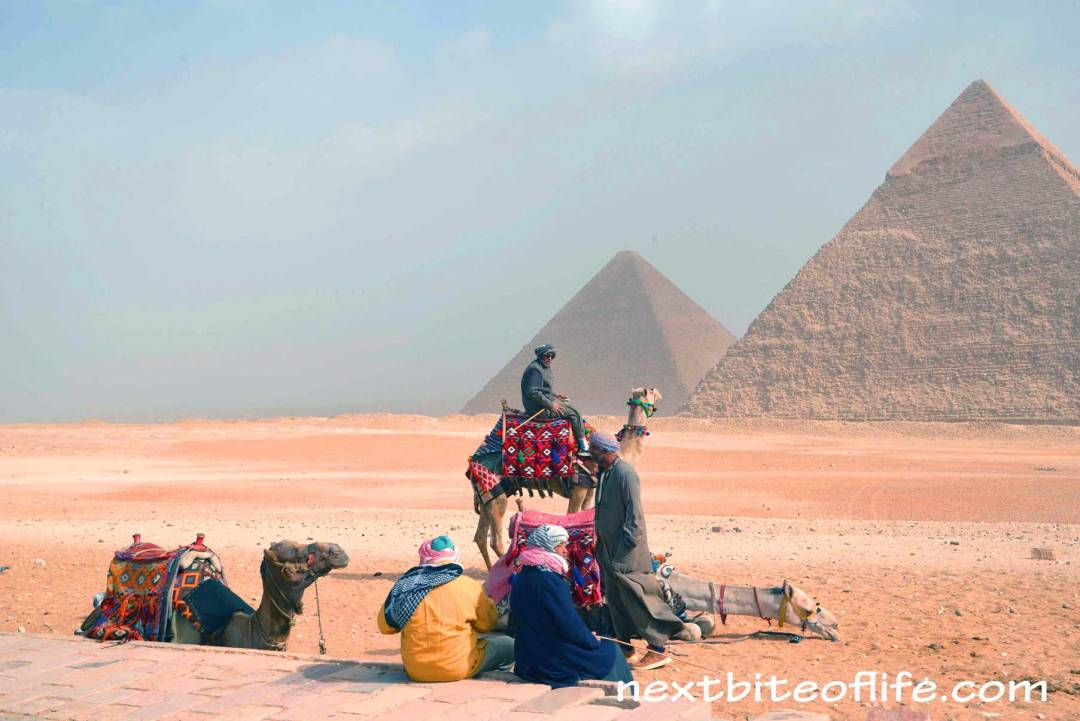 Postcard from Cairo Egypt pyramids and camels