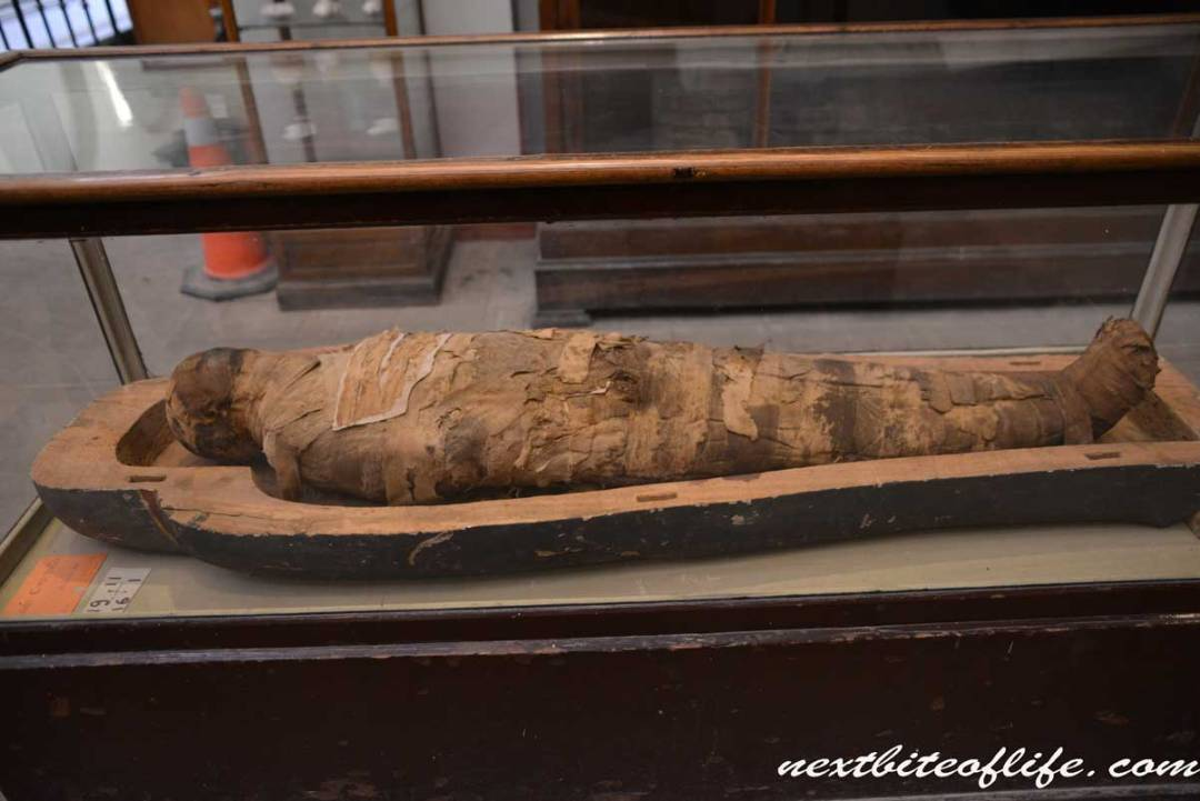 mummified figure at Egyptian museum.