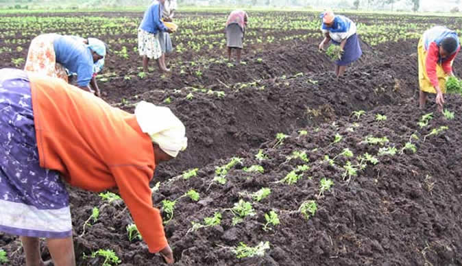 BOA disburses N262bn to farmers