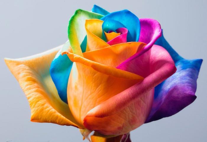 Traumdeutung welche Trume Rosen