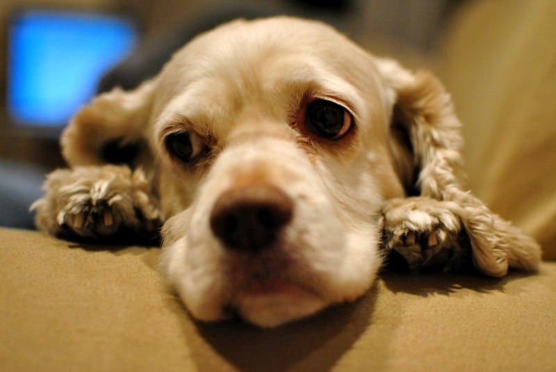 Give Up the Guilt of Rehoming Your Pet