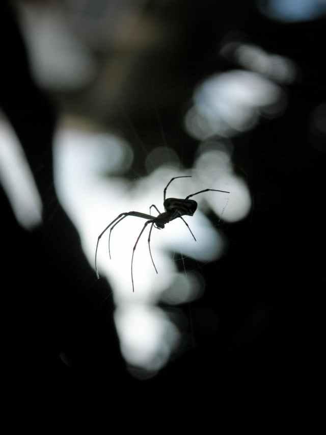 Abstract animal arachnid art