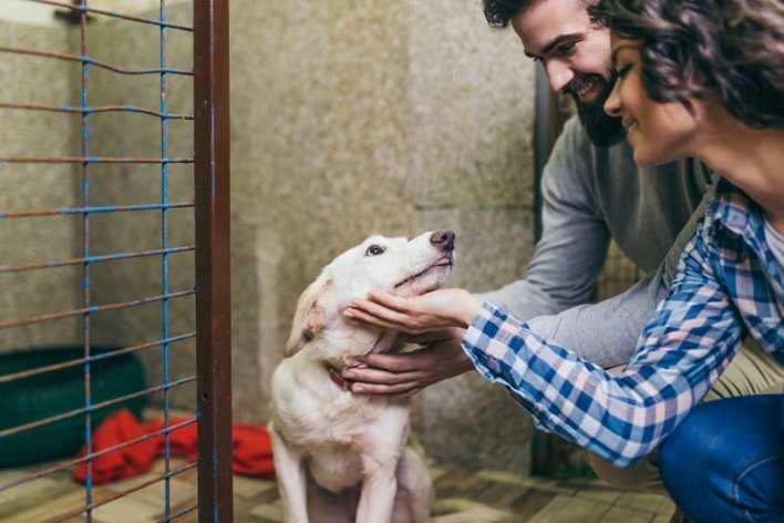 Pet-Rescue-Best-Hobbies-For-Couples
