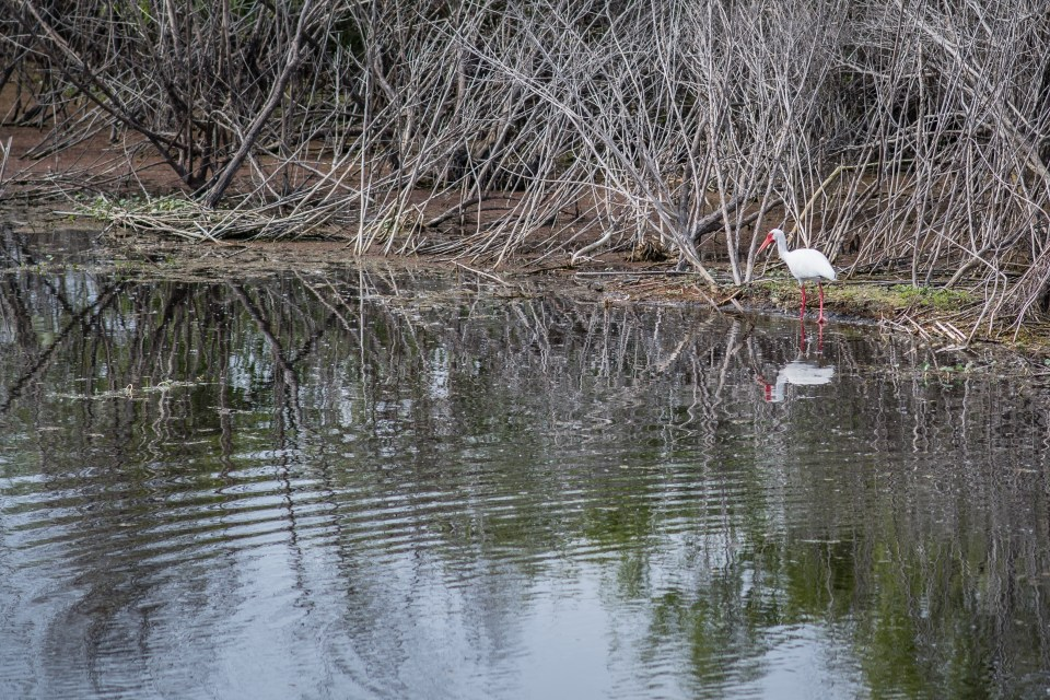 best places for nature photography in central florida
