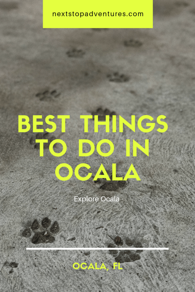 best things to do in ocala