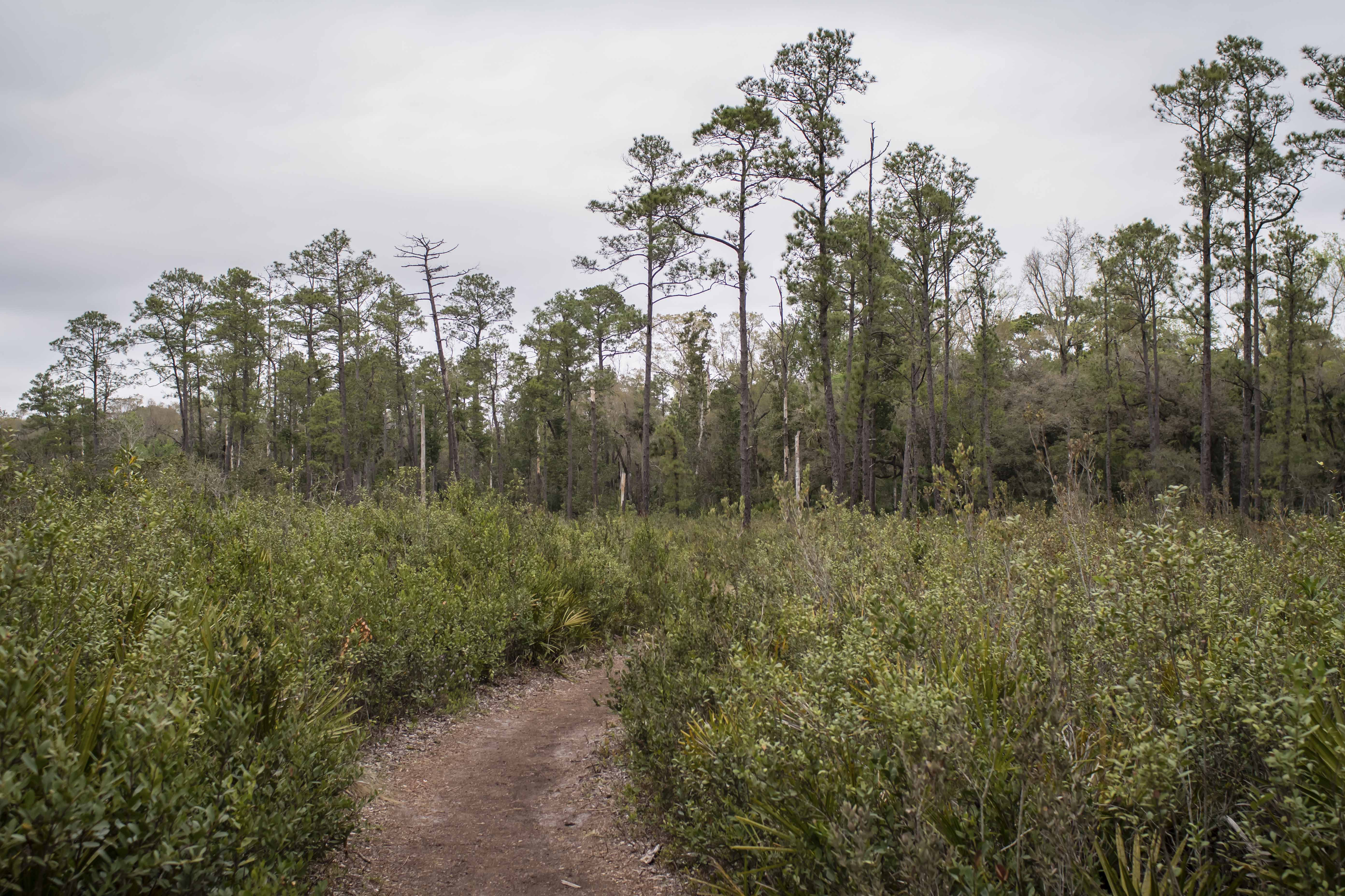 hiking on cloudy days in central florida
