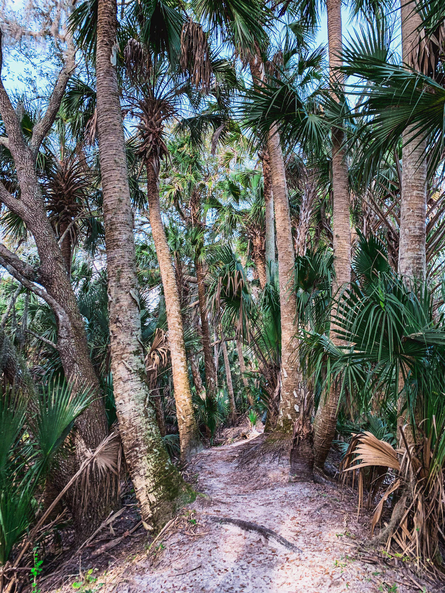 hiking trails in Central Florida