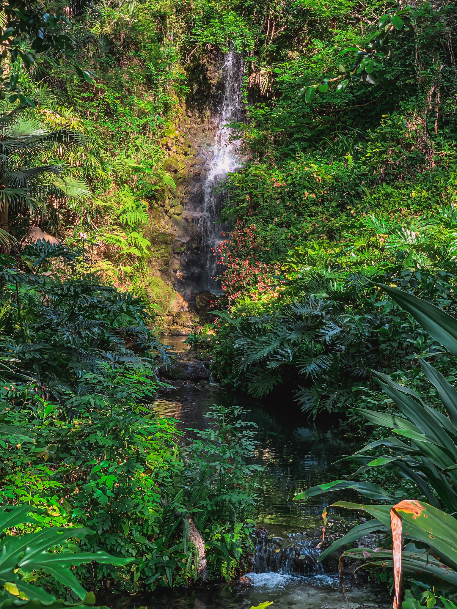 garden oasis and waterfalls in Florida