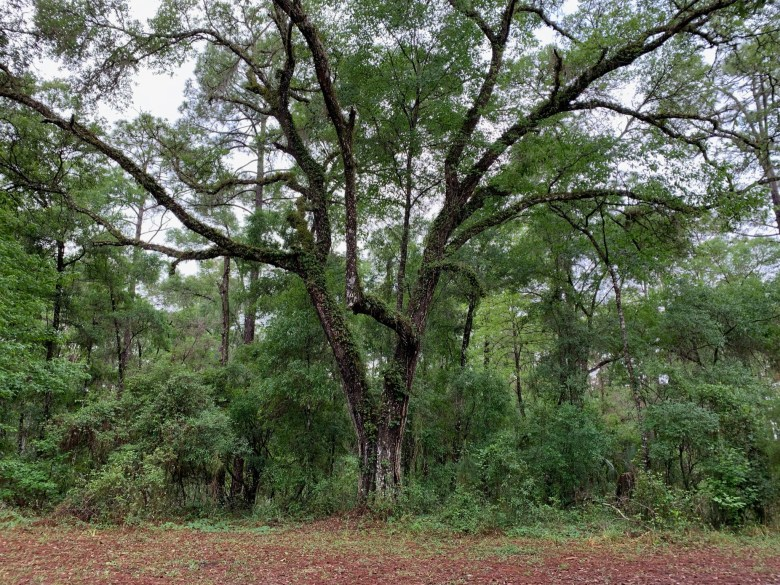 hiking in Withlacoochee State Forest