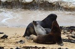 sea-lions-2