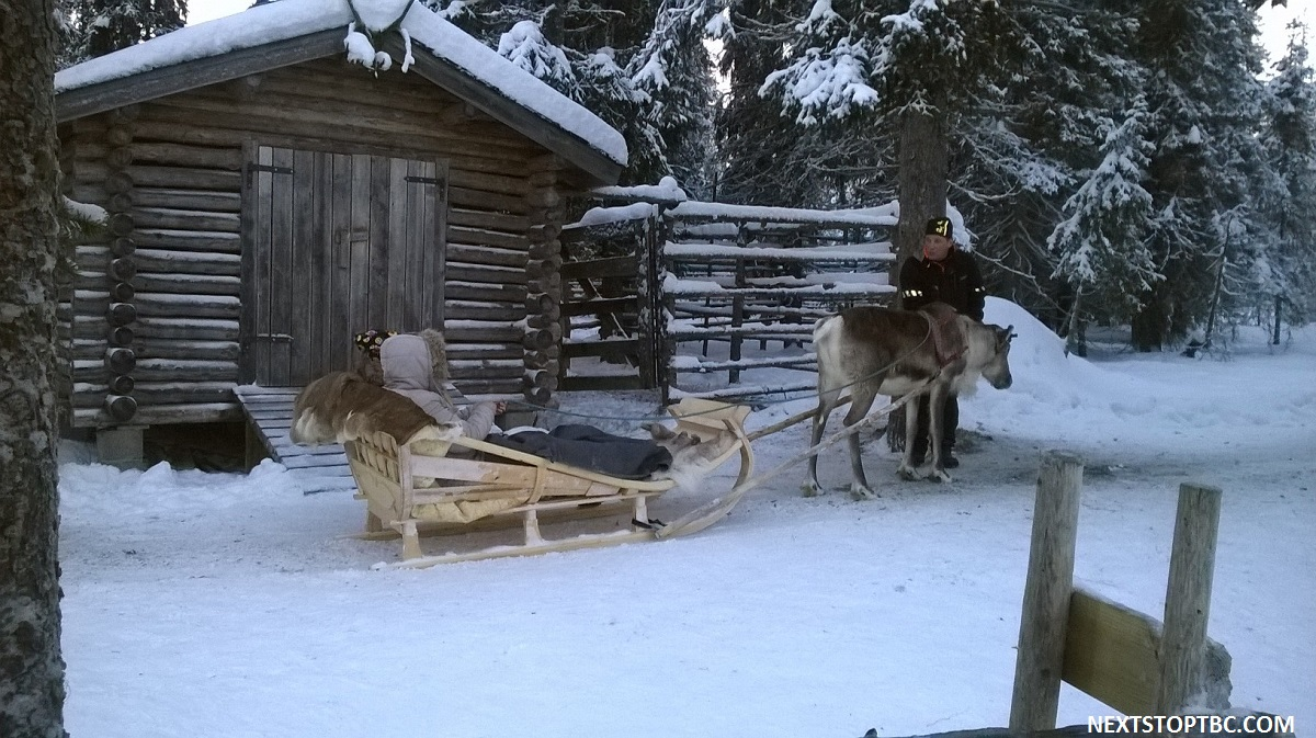 Ruka reindeers and huskys