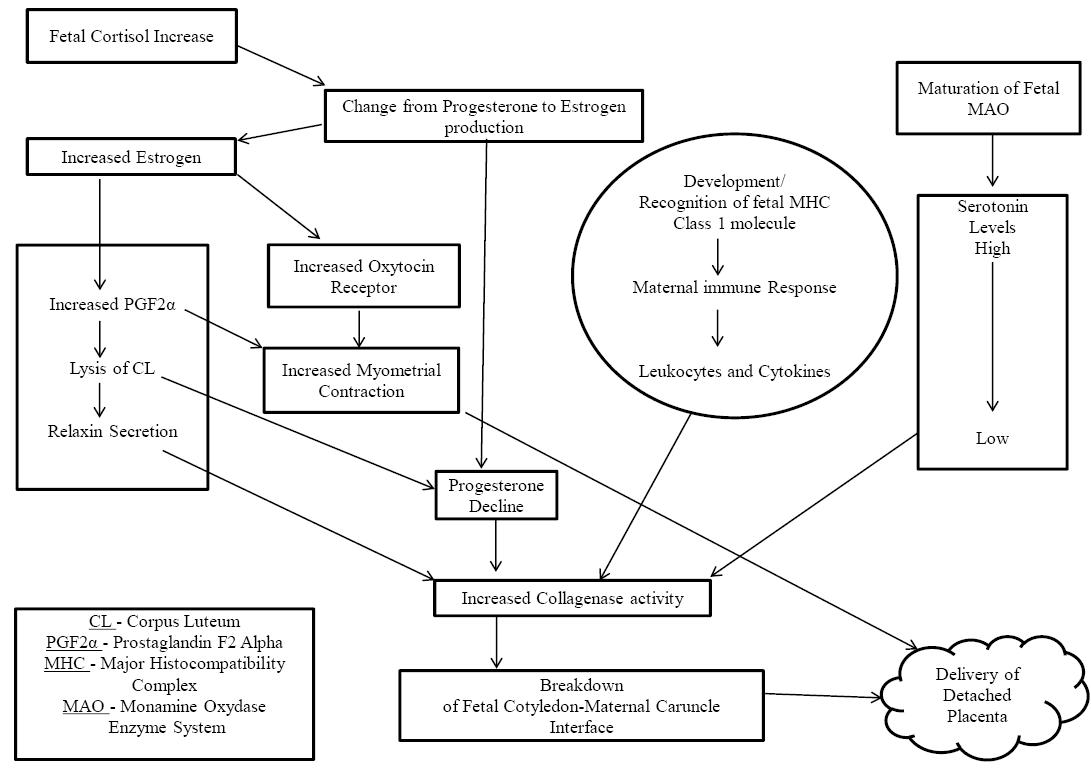 Nexus Academic Publishers (NAP)