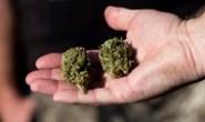 Политика и марихуана. Зачем нужен медканнабис