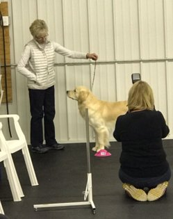 Owner with Golden Retriever learning how to show her dog