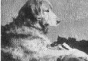 This image features Crocus (Nous x Belle) born 1868.