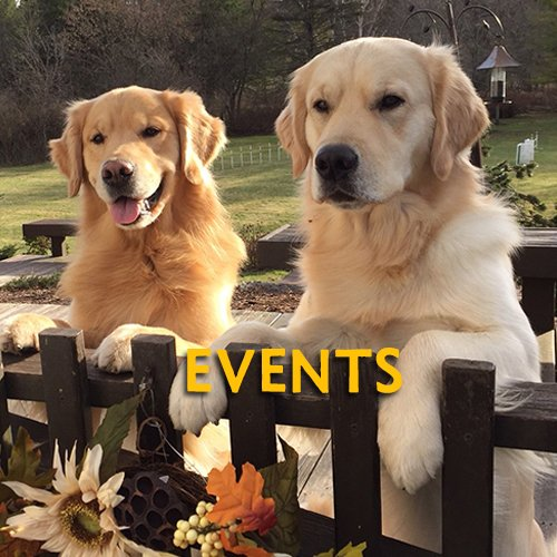 Golden Retriever Home Page Events Button