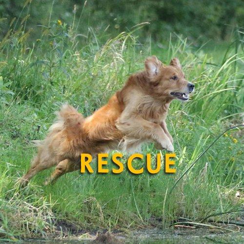 Golden Retriever Home Page Rescue Button