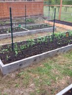 Raised beds with spring crops