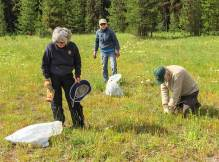 Donna, Debo, and Randy pulling knapweed