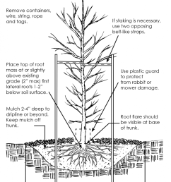 diagram on tree planting [ 946 x 1200 Pixel ]