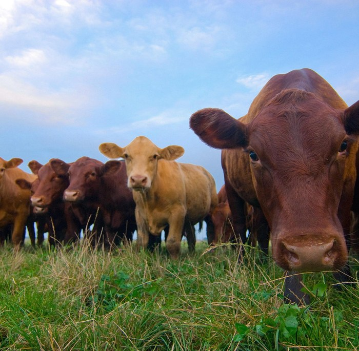 NFU Urges Administration to Keep COOL as a Priority for Trade Agenda
