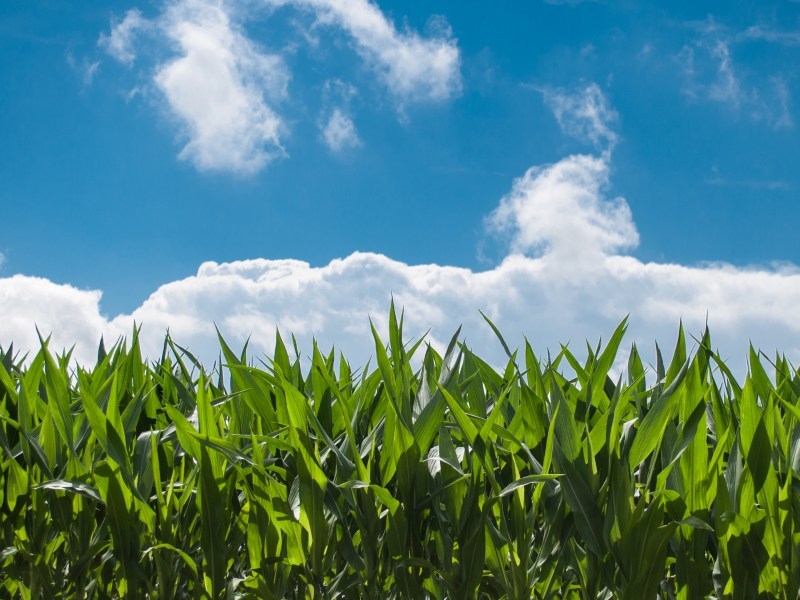 NFU Statement on Pruitt Backing of Renewable Fuel Standard
