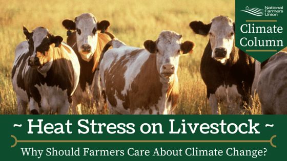 Climate Column - Heat Stress on Livestock