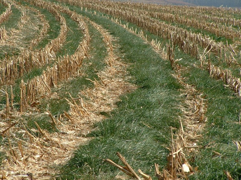 What Can Farmers Do About Climate Change? Cover Crops