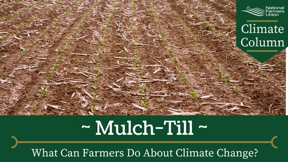 mulch-till