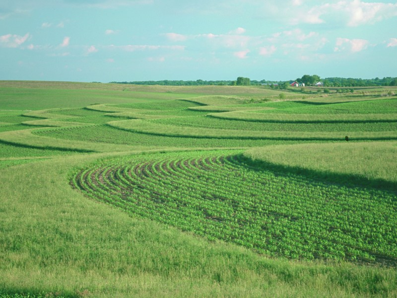 What Can Farmers Do About Climate Change? Vegetative Barriers