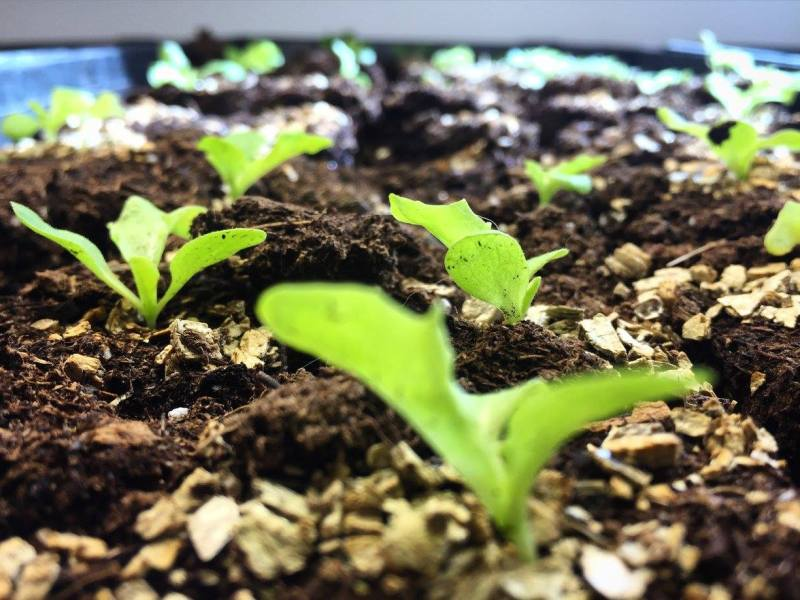 Access to Capital: Two Roots Farm & Slow Money
