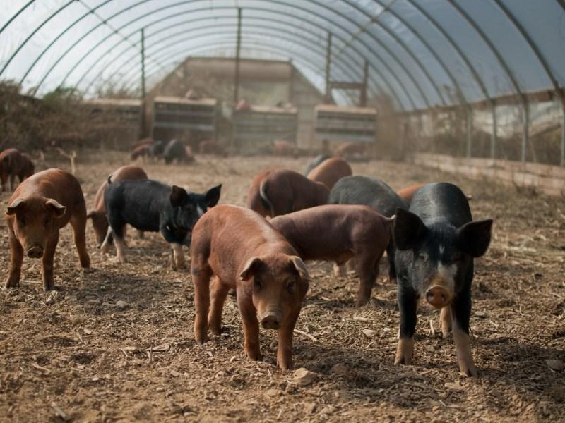 Access to Markets: The Greenway Farm Family & Farm Advocacy