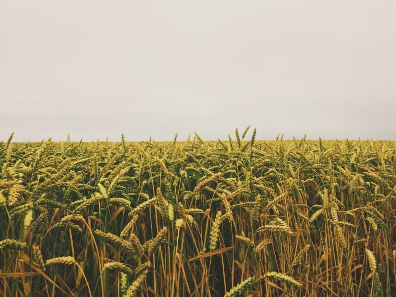 Access to Land: Leasing Farmland