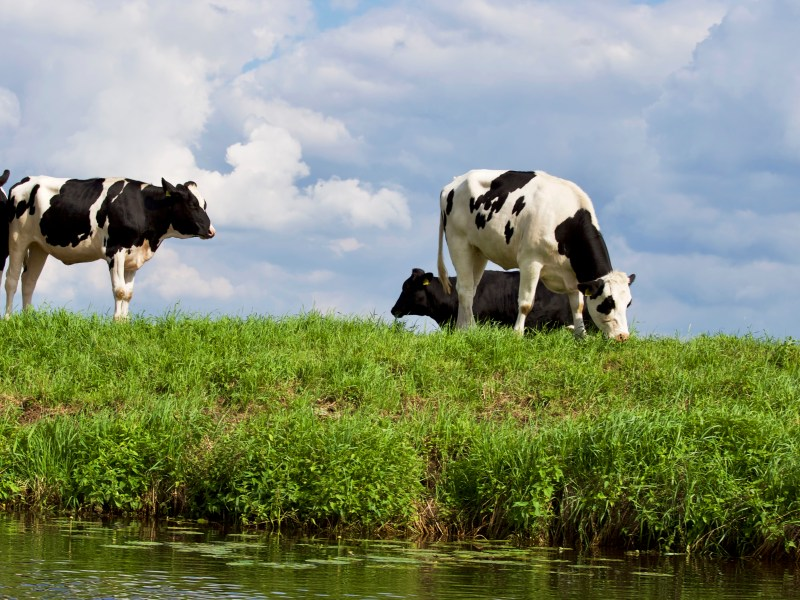 What Should Farmers Know About Climate Change? Livestock & Carbon Sequestration