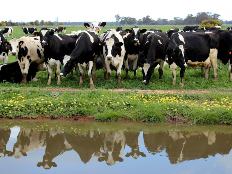Proposed Rule Would Level Playing Field for Organic Dairy Farmers