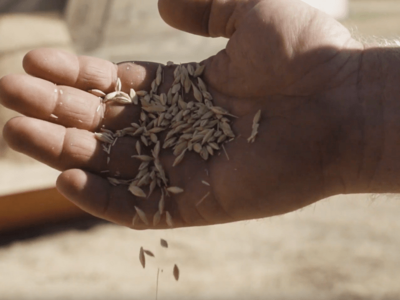Access to Efficiency: Seed Treatment