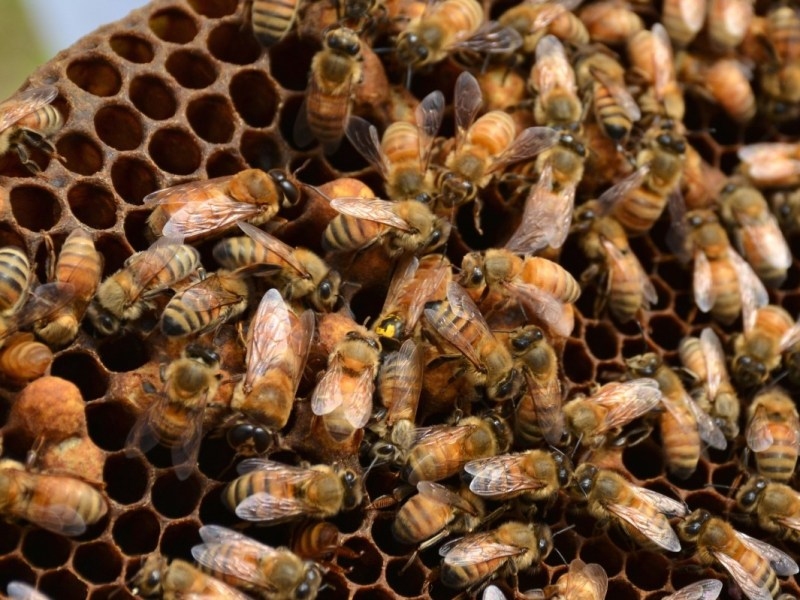 Why Do Farmers Care About Climate Change? Colony Collapse Disorder