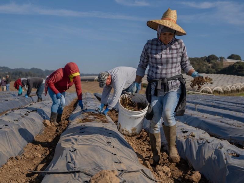 NFU, Ag Groups Urge Farm Labor Reform