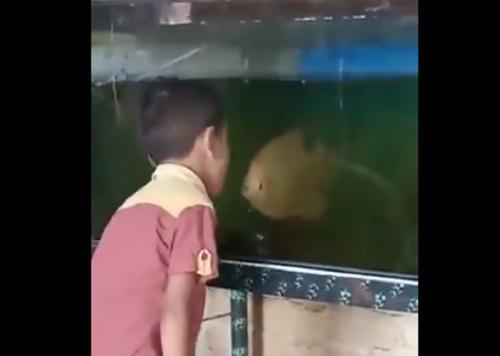 Video Viral Bocah Adu Mulut dengan Ikan ini Bikin Ngakak