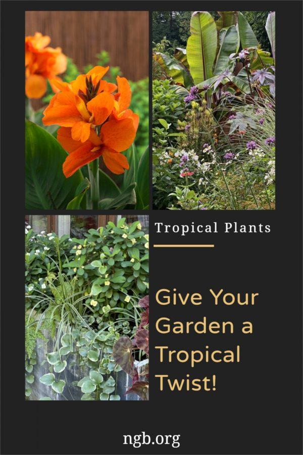 Give Your Garden a Tropical Twist with Tropical Plants - National Garden Bureau